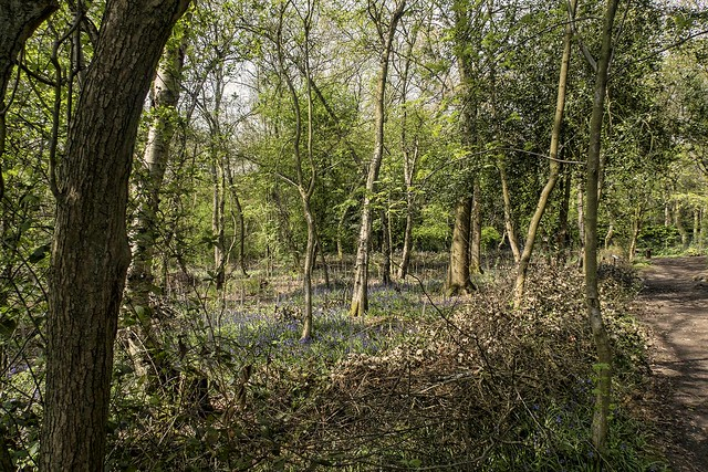 Millisons Wood
