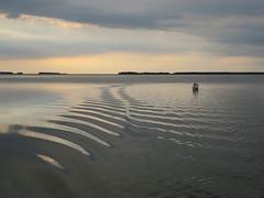 Abend auf dem Bodden (Waldrebe) Tags: nationalparkvorpommerscheboddenlandschaft fischlanddarszingst ostsee balticsea