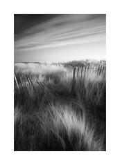 quest (vuzephotography.co.uk) Tags: thornham norfolkcoast ir infrared marram longexposure
