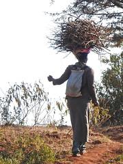 Woman carrying firewood (David Bygott) Tags: africa tanzania photosafari natgeoexpeditions 170820 woman carrying firewood headload karatu shangrila farm