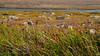 2017.09.05-38-2 (ivoryblushroses) Tags: colorado flora mtevans nature smoke