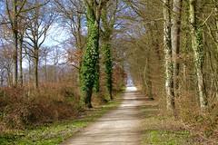 "Jolie promenade en forêt!   ""Seine et Marne - France""   Pretty walk in the forest! (josianelavielle) Tags: forêt arbres ciel ronces nature paysage nuages"