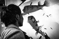 "Kissing fish <a style=""margin-left:10px; font-size:0.8em;"" href=""http://www.flickr.com/photos/29304460@N03/36932198425/"" target=""_blank"">@flickr</a>"