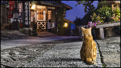 Tranquil Cat (Sunbound) Tags: sony a7 fe55mm japan cat calm nakasendo