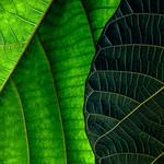 Leaf Art thumbnail