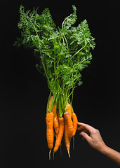 my carrot harvest (auntneecey) Tags: carrots me 365the2017edition 3652017 day251365 8sep17 blackbackground odc coloronblack