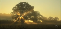 Mist Explosion. (Picture post.) Tags: landscape nature green mist autumn oak trees sunburst fields shadows paysage arbre brume