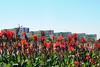 Fotos produzidas pelo Senado (Senado Federal) Tags: bie esplanandadosministérios fachada prédio flores florvermelha brasília df brasil bra