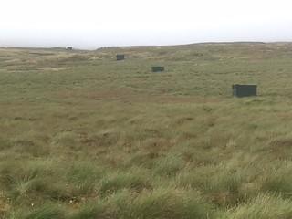 Scotland Bird Hunting 9