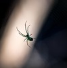 spider light (primemundo) Tags: spider odc web light arachnid 8legs