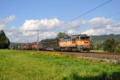 753.706 by marcello.sk - Preprava do Vrútok troch rušnov DB Schenker Rail Polska. V čele vlaku bol okuliarnik AWT 753.706. Konkrétne sa jednalo o jedného kocúra s poľským označením 92 51 7 620 163 - 8 (T448p-152) a dva čmeliaky: 92 51 3 620 023 - 3 (S200-249) a 92 51 3 620 300 - 3 (S200-258).