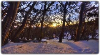 Snow Gums @ sunset