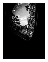 naturepass (seba0815) Tags: ricohgrdiv ricoh grdiv grd monochrome train window trees tree nature sky daylight poland sopot skm naturepass passing blackwhite black white bianco nero blanc noir schwarzweis czarnobiale mood seba0815
