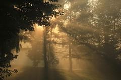 Foggy Sunrise on The Hill_1720 (Prof Ryall) Tags: sunrise fog rays westhill worcesterny otsegocounty