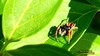 59 (bebsantandrea) Tags: levanto baiedellevante liguria natura campagna wild giardino fiori rosa pesco ciliegia fico ficodindia carciofo formica topo libellula mosca zanzara grillo ape vespa lucertola lizard farfalla butterfly riccio cimice ramarro afide pianta albero ragnatela gocce raindrop microcosmo sfingedelgalio farfallacolibrì ragno spider limone arancio arancia boragine impollinatrice cicala autunno estate primavera inverno bruco margherita zucca lampone fragola mantidereligiosa gallina coniglio coccinella kiwi