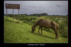 Assateague Island (vonhoheneck) Tags: assateague island national seashore maryland virginia eastcoast usa ostküste canon eos6d schoelkopf schölkopf