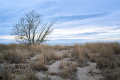 Headland Dunes (HJharland5) Tags: sky clouds grass tree lake lakeerie ohio mentor sand water evening field dune beach shore