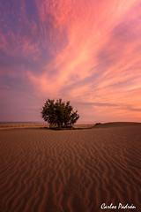 Sublime (Carlos Padrón Noble) Tags: 2017 árbol agua arena cielo dunas españa grancanaria islascanarias laspalmas mar maspalomas naturaleza nubes paisajes playa puestadesol sol