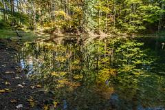 Mokry Stawek (Kajfash) Tags: canoneos5dmarkii canonef24105mmf4lisusm babiogórskiparknarodowy lake jezioro staw jesieńwgórach jesień autumn landscape krajobraz poland polska las forest woda water drzewo tree wood