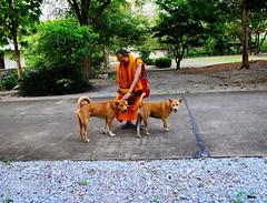 ,, Rocky, Kind Monk, Mama ,, (Jon in Thailand) Tags: dmz themonkeytemple mama rocky monk thekindmonk jungle thedogpalace nikon nikkor d300 175528 dogs dog k9 k9s happydogs luckydogs 2dogs smilingdogs trees dogtails dogears dogsmile motherson green orange red boundaryline street streetphotography streetphotographyjunglestyle gentlehand thaimonk buddhistmonk almsbowl littledoglaughedstories