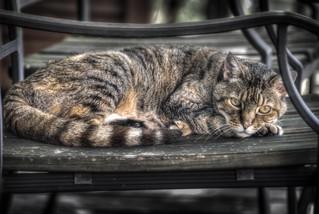 Cat_4138