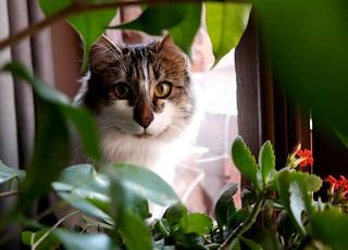 Katty (Explore)