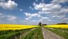 Der Weg (carsten.plagge) Tags: 1mai mai raps wolken blau gelb grün
