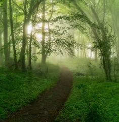Enchantment (jactoll) Tags: longborough gloucestershire cotswolds mist misty woods woodland forest mood landscape appicoftheweek sony a7ii sony2470mmf28gm jactoll