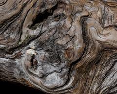Burnished Wood (Ramona H) Tags: cascades lakeserenetrail hiking trail wood abstract pattern lakeserene stevenspass