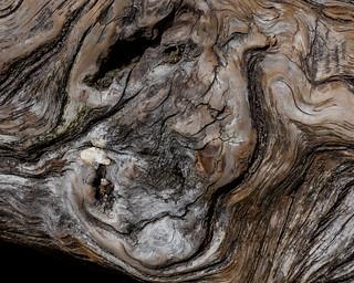 Burnished Wood