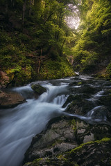 The Sound of the River (Manuel.Martin_72) Tags: alpstein stgallen swissalps switzerland drama enchanting fairytale lightdrama magic forest grass green moss rocks stones trees woods river water cloudy unterwasser ch