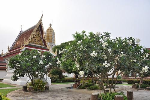 phitsanulok - thailande 10