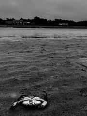 Lone crab (The Big Jiggety) Tags: crab crabe cangrejo beach plage playa