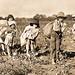 Share Cropper's children picking cotton - ca1914