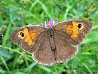 Butterfly 1408