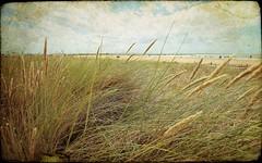 Loin dans les terres. (*Jost49* (±Off)) Tags: france poitoucharente châtelaillonplage plage beach vegetation texture canoneos6d canonef1635f4lisusm