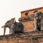 Elefantes de cemento thumbnail