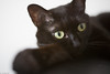 Sora (elmar35) Tags: cat sony kin switar alpa blackcat