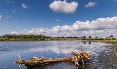 Kalmthoutse Heide (Mariannevanderwesten) Tags: kalmthoutseheide reflection reflectie nature natuur nikon sigmalens landschap ven wolkenlucht clouds