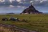 Le Mont Saint Michel (jlviaud) Tags: aguila fz200 moutons tracteur lemontsaintmichel