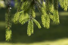The tree of life .. (ByOtA ...........) Tags: tree life human light god message shadow byota canoneosrebelt6i omar 2017 sun green music quote goethe vivaldi