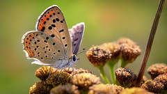 Earthly Beauty (Unicorn.mod) Tags: 2017 colors macro nature yellow green orange bokeh smooth butterfly summer canoneos6d canonef100mm28lisusm canon outdoor plants