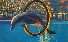 Marineland of the Pacific, Los Angeles, California (Thomas Hawk) Tags: america california losangeles marineland marinelandofthepacific usa unitedstates unitedstatesofamerica dolphin postcard fav10 fav25 fav50