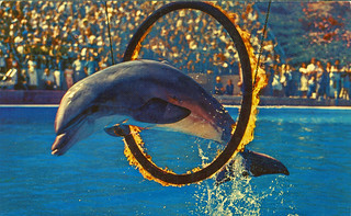 Marineland of the Pacific, Los Angeles, California