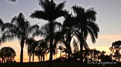 FOZ DO IGUAÇU - PR (Erika Beganskas - Fotografia) Tags: foz do iguaçu fozdoiguaçu nationalgeographic ng ebeganskas erika beganskas paraná wish resort paisagem aves natureza nature brasil brazil arara papagaios agua cataratas cachoeira beleza natgeo