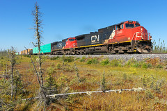 CN 365 @ Signai, QC (Mathieu Tremblay) Tags: senneterre quebec canada ca signai railroad railway chemindefer train locomotive canadien canadian national 365 tree arbre moss tourbe saintmaurice subdivision 2660 ge generalelectric c449w sony a99 sal2470z
