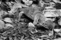 walter_rothwell_photography_cats-020 (walter_rothwell) Tags: walter rothwell photography cairo cats egypt blackandwhite fuji neopan400 35mm film analog monochrome darkroom