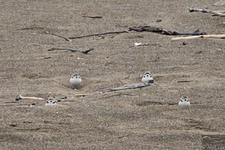 SNPL winter flock