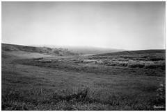 Field in Morning Fog: Expired Verichrome Pan (Larry Buechler) Tags: kodak verichromepan film analog mediumformat kodaktourist 620film expiredfilm fields farm rural quadcities