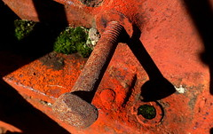 RUSTY BOLT from a VINTAGE TRACTOR (Lani Elliott) Tags: lanielliott vintage yesteryear rust bolt moss greenandrust tractorbolt orange brown shadow rusty macro upclose close closeup macrounlimited superb excellent beautiful fantastic brilliant